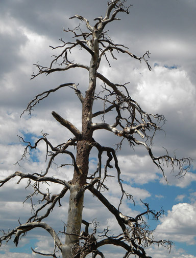 ArtImage-Tree1low